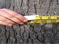 سن این درخت چقدر است ؟