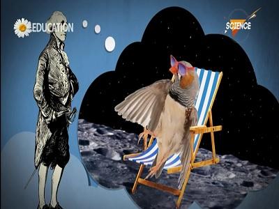 پرندگان زمستان کجا می روند؟