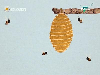 زنبور عسل و دنیای شش ضلعی آنها