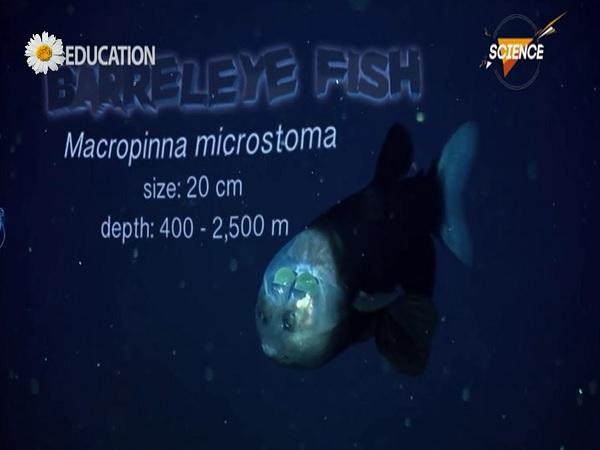 موجودات اعماق اقیانوس ها